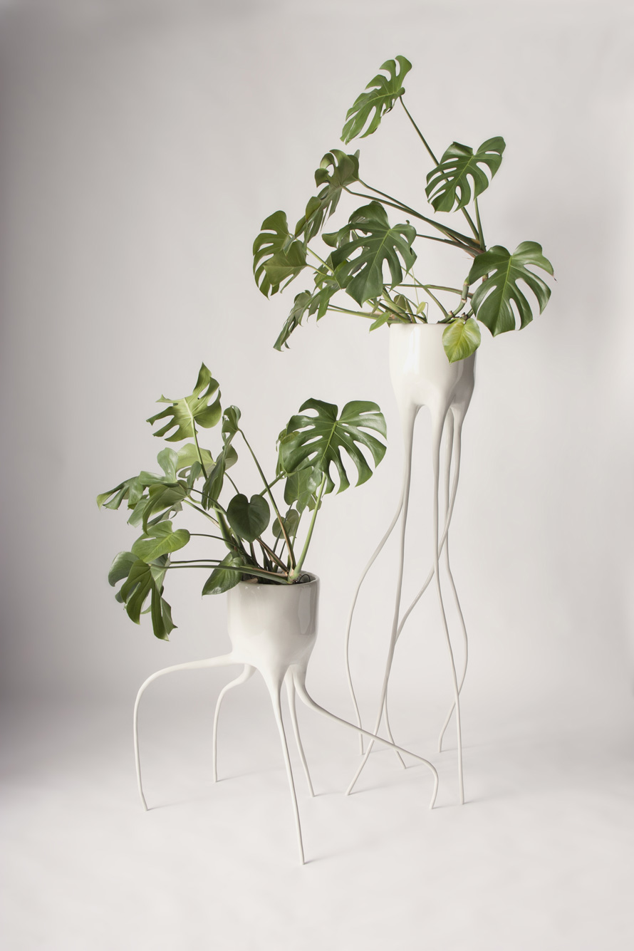 monstera-main