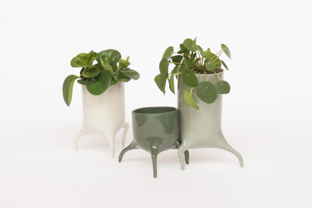 carnivora colour set design planter