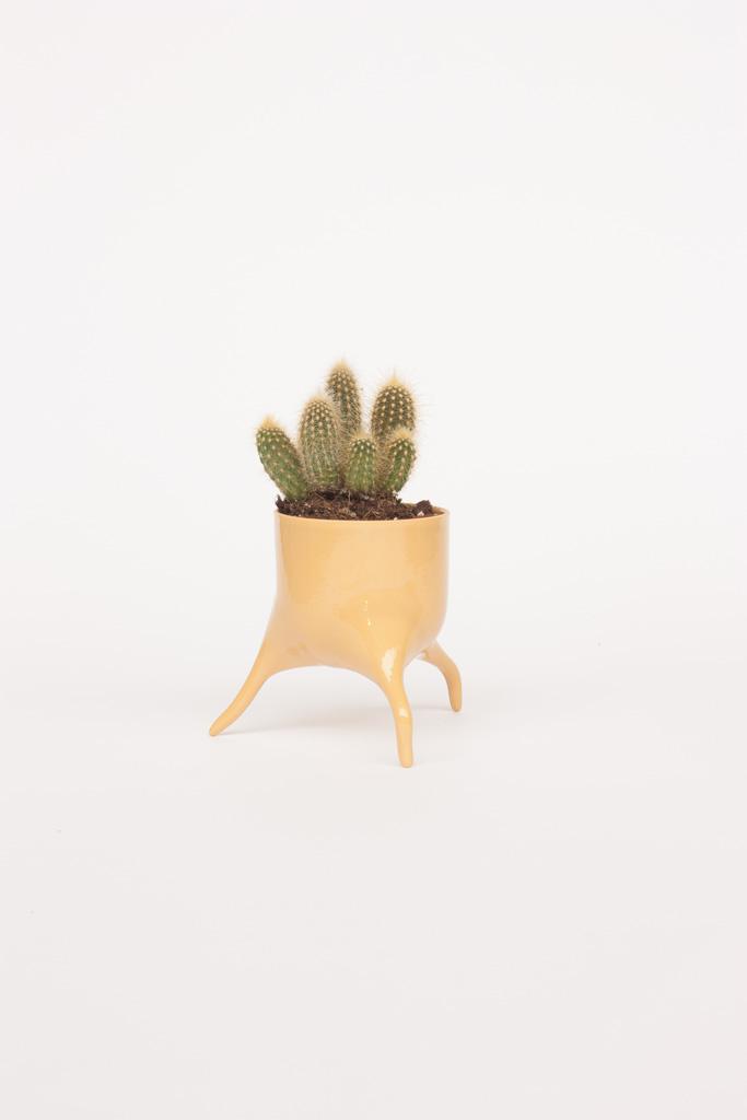 carnivora minima ochre design planter