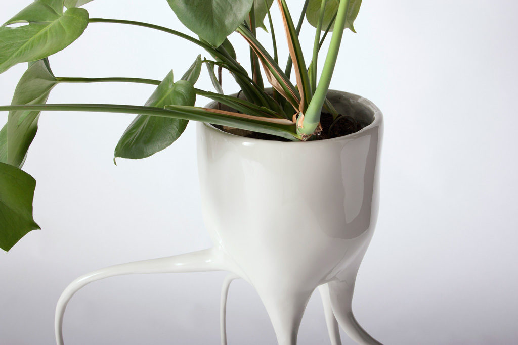 monstera fugiens detail planter