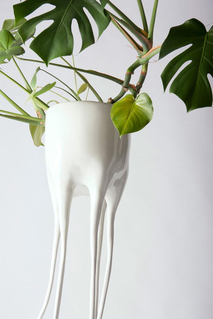 monstera magnifica detail planter