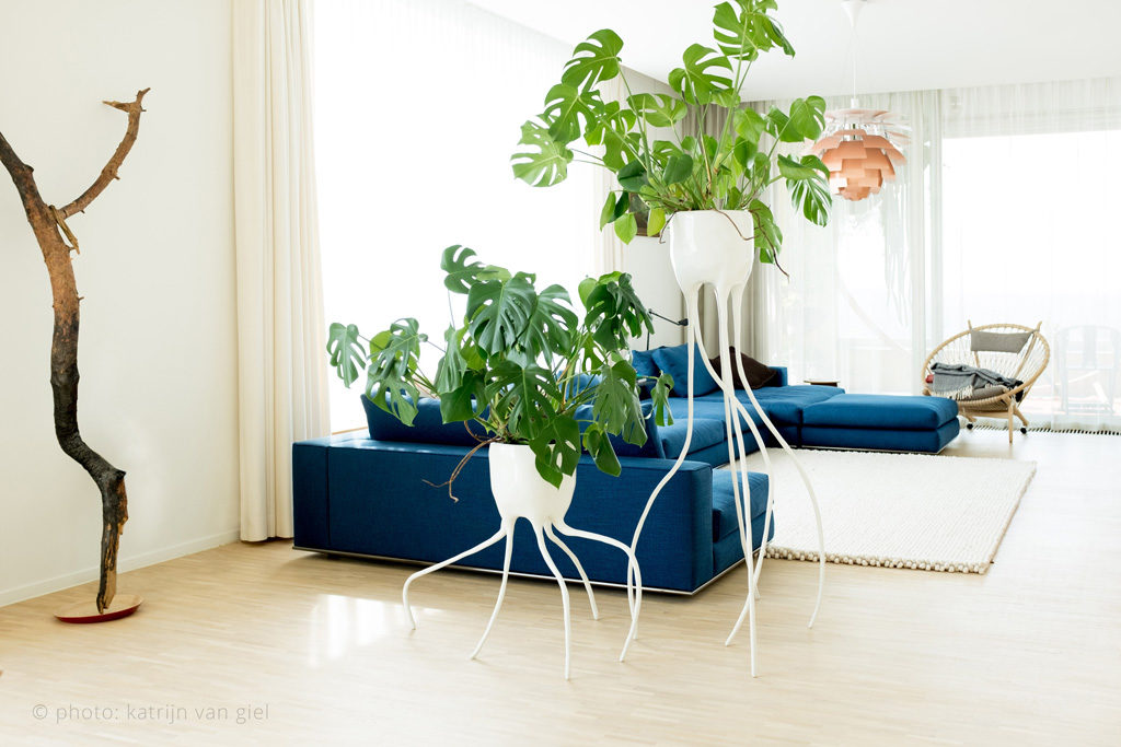 monstera design planters interior