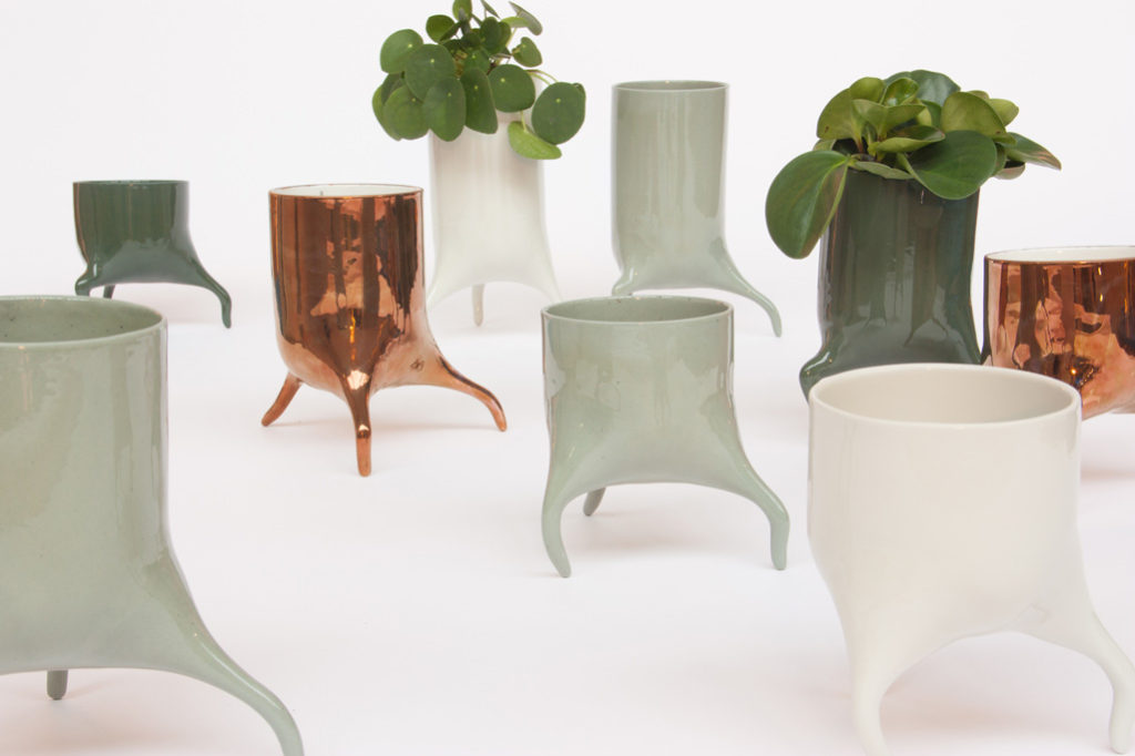 carnivora colour group design planter
