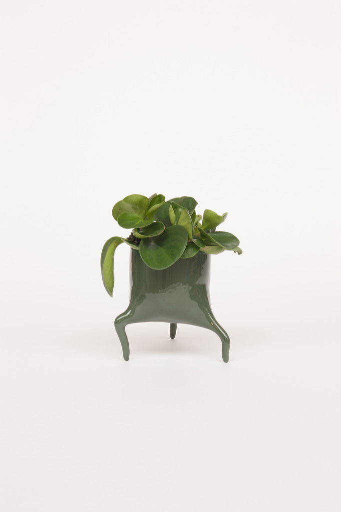carnivora minima pinegreen design planter