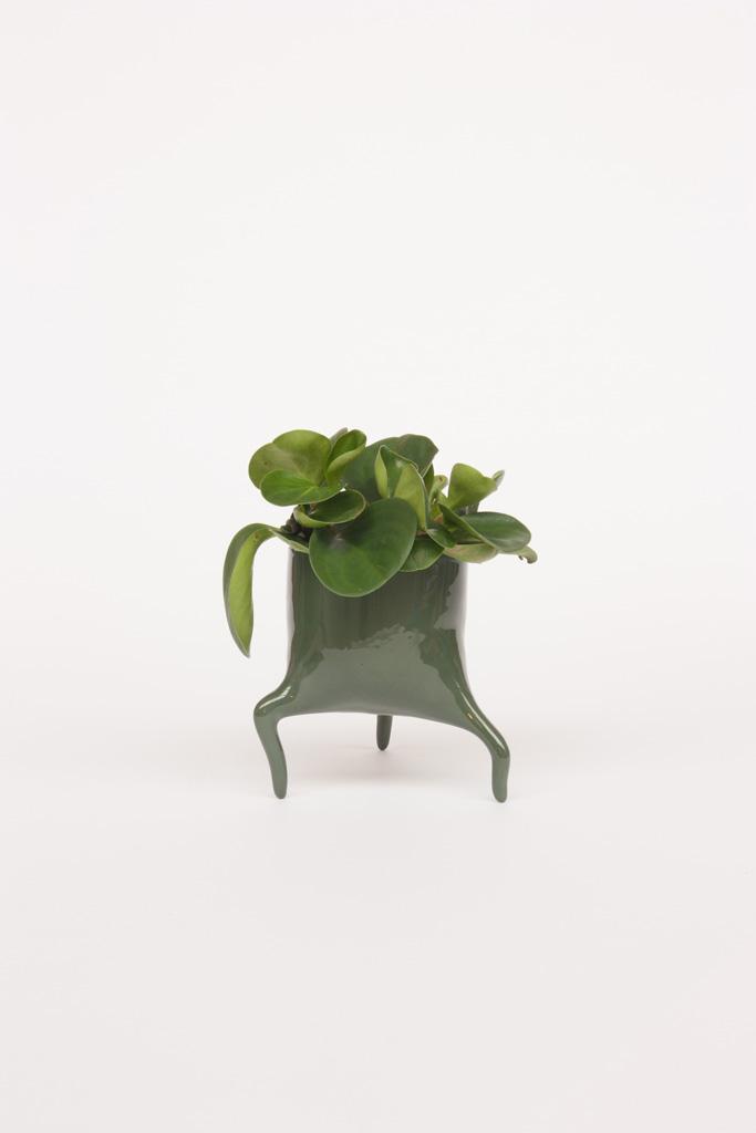 carnivora minima pinegreen design planter